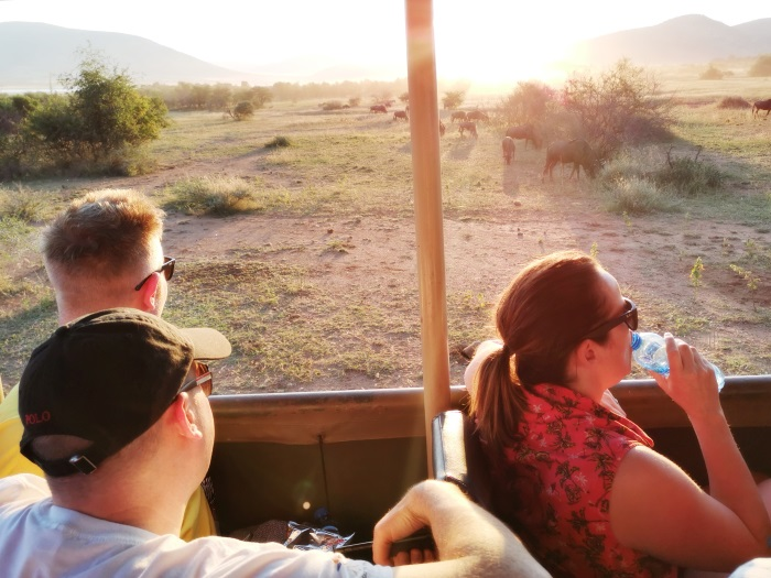 Three people in a safari van looking out to an African plain, filled with antelope.